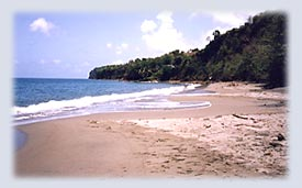 Woodlands Beach in Montserrat